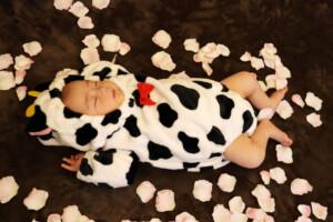 スタジオバンビ鈴鹿/お宮参り写真撮影。着物の後に牛の着ぐるみで撮影。花びらを散らしてみました
