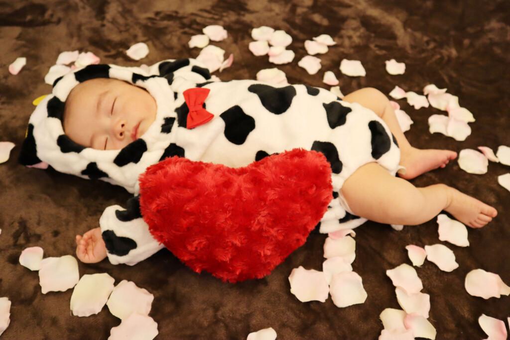 スタジオバンビ鈴鹿/お宮参り撮影の後、牛の着ぐるみを着て撮影しました。午前中に鈴鹿市白子の子安観音様へお参りに行ったため、疲れて寝ちゃいました。